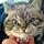 猫凶凶QQ表情包