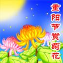 重阳节-赏菊花