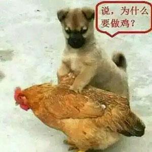 为什么要做鸡