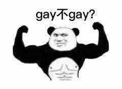 gay不gay